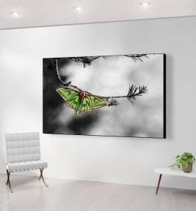 Grand Tableau isabelle sur une branche de pin monochrome