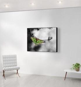 Moyen Tableau isabelle sur une branche de pin monochrome