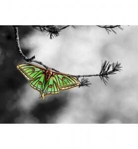 Tableau isabelle sur une branche de pin monochrome