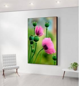 Grand Tableau Fleurs de pavot rose