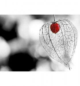 Tableau Amour-en-cage monochrome