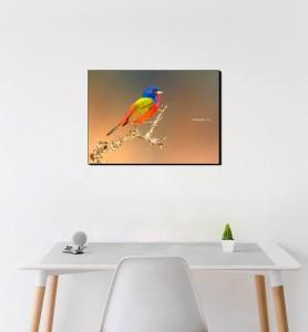 Moyen Tableau Passerin l'oiseau multicolore
