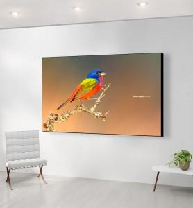 Grand Tableau Passerin l'oiseau multicolore