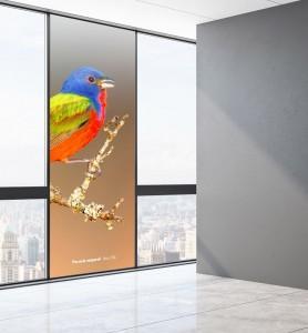 Vitrophanie Passerin l'oiseau multicolore