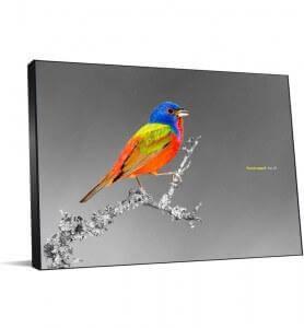 Tableau Passerin l'oiseau multicolore noir et blanc