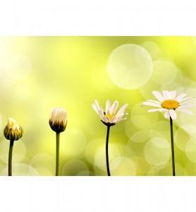Tableau Naissance d'une fleur