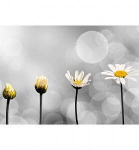 Tableau Naissance d'une fleur noir et blanc
