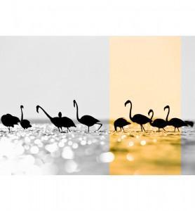 Tableau Flamands dorés noir et blanc
