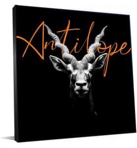 Tableau d'une antilope noir et blanc