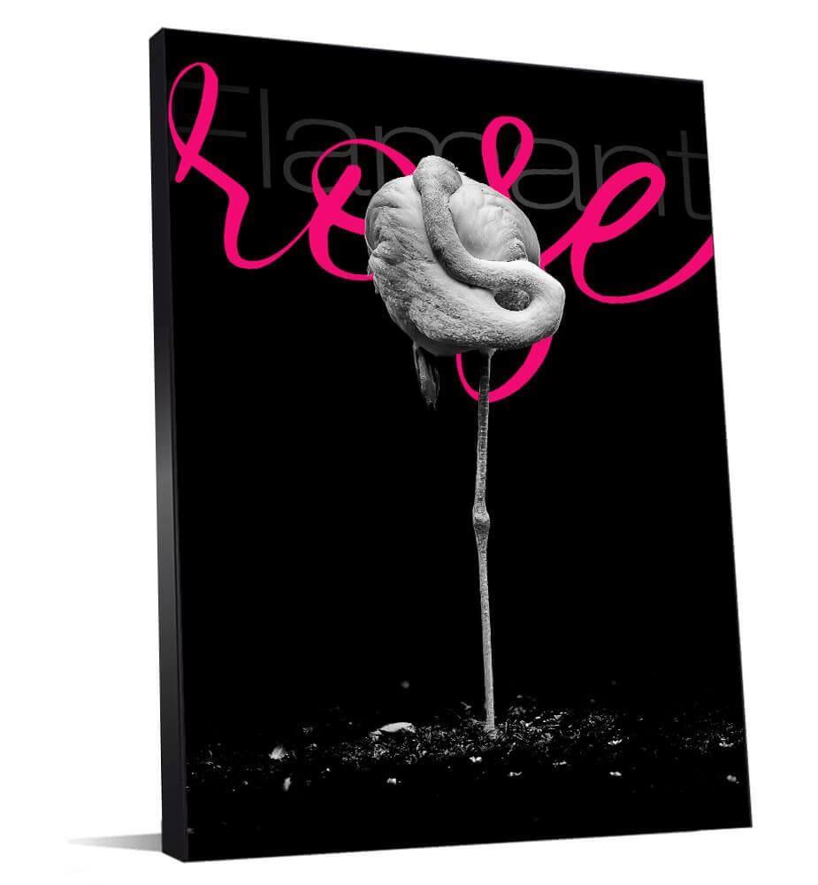belle image de flamand rose