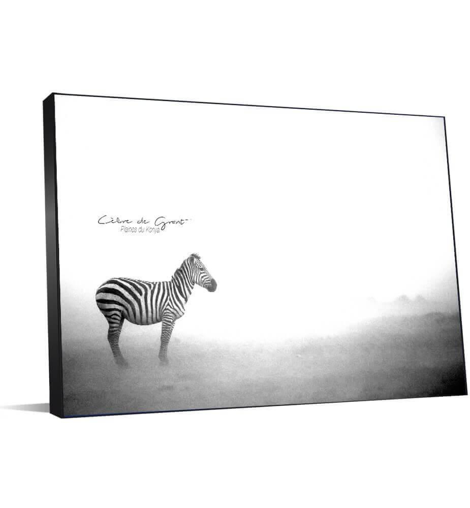 photo grand format noir et blanc de zèbre