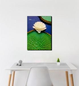 Moyen Tableau décoration Fleur de nénuphar