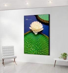 Grand Tableau décoration Fleur de nénuphar