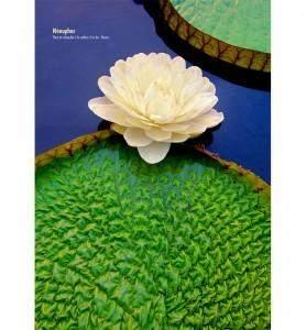 Tableau décoration Fleur de nénuphar
