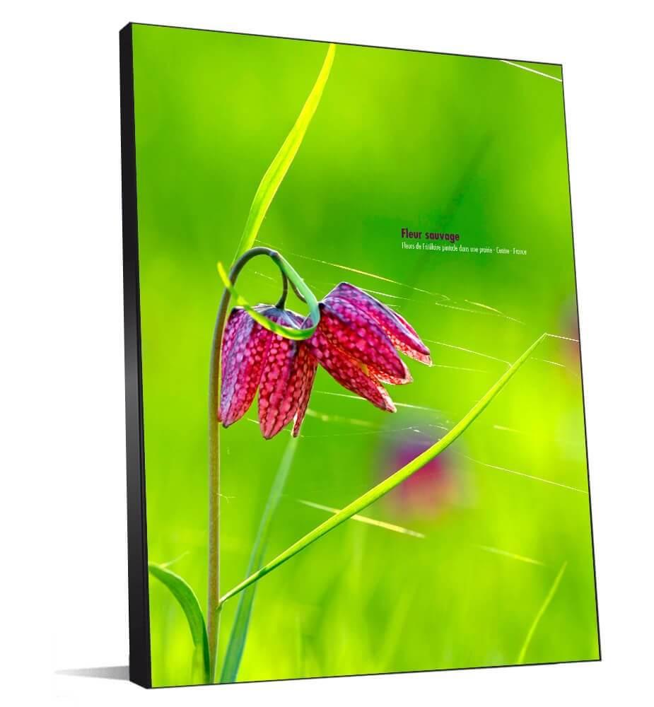 Tableau décoration Fleur sauvage