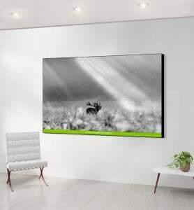 Grand Tableau décoration Cerf éclairé noir et blanc