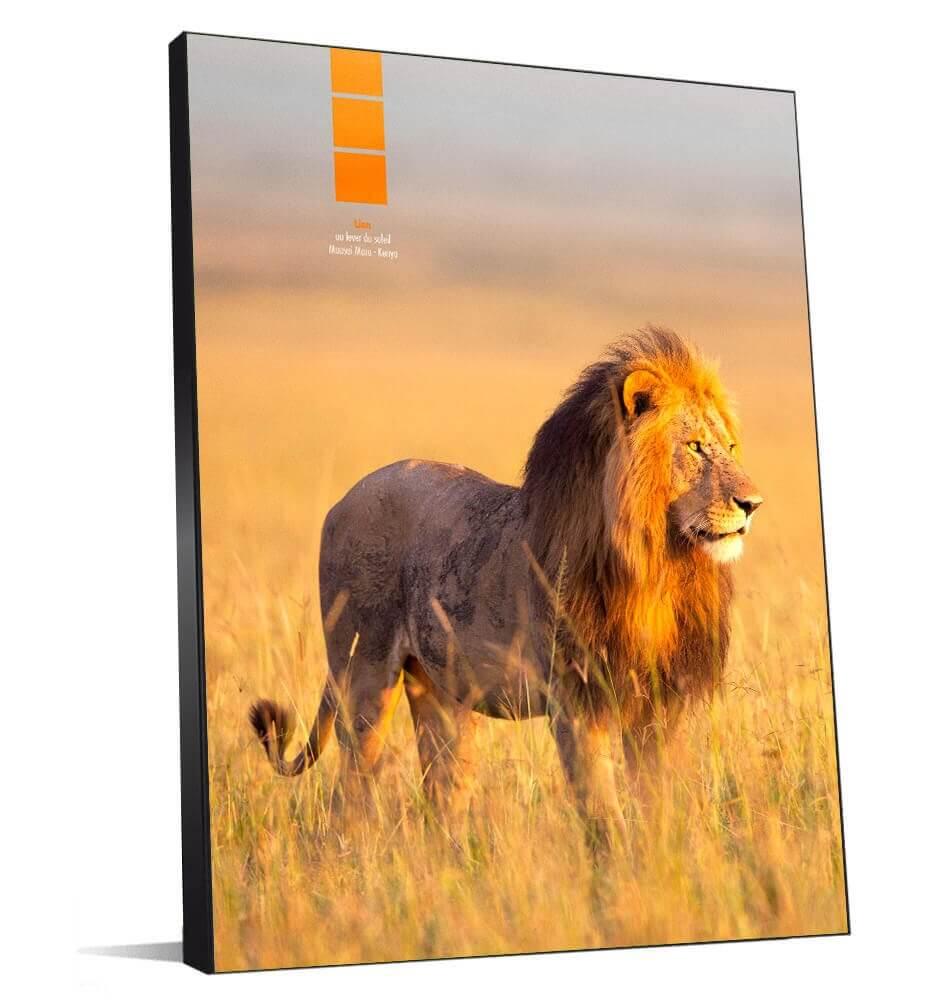 Tableau décoration Lion au Kenya