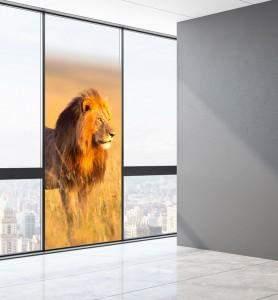 Vitrophanie décoration Lion au Kenya