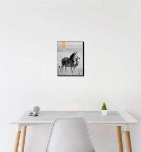 Petit Tableau décoration Lion au Kenya noir et blanc