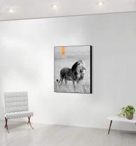 Moyen Tableau décoration Lion au Kenya noir et blanc