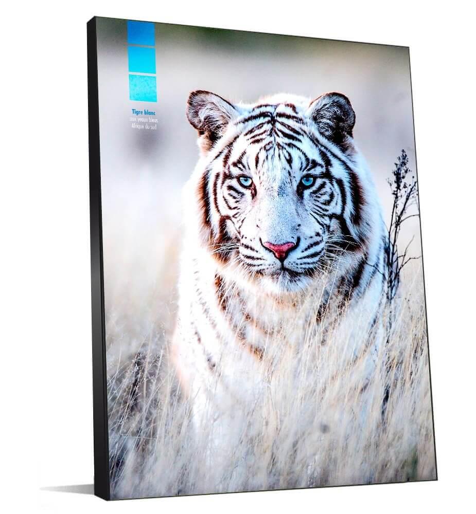 Moyen Tableau décoration Tigre blanc