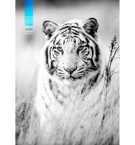 Tableau décoration Tigre blanc
