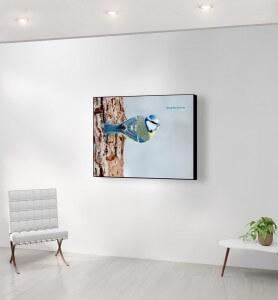Moyen Tableau Mésange bleue