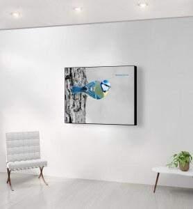 Moyen Tableau Mésange bleue noir et blanc