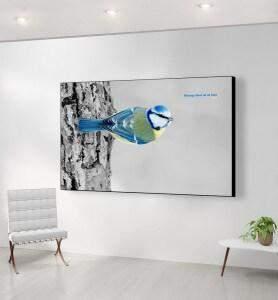 Grand Tableau Mésange bleue noir et blanc