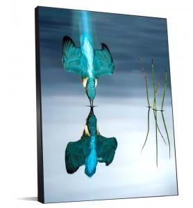 Tableau Plongeon du Martin pêcheur