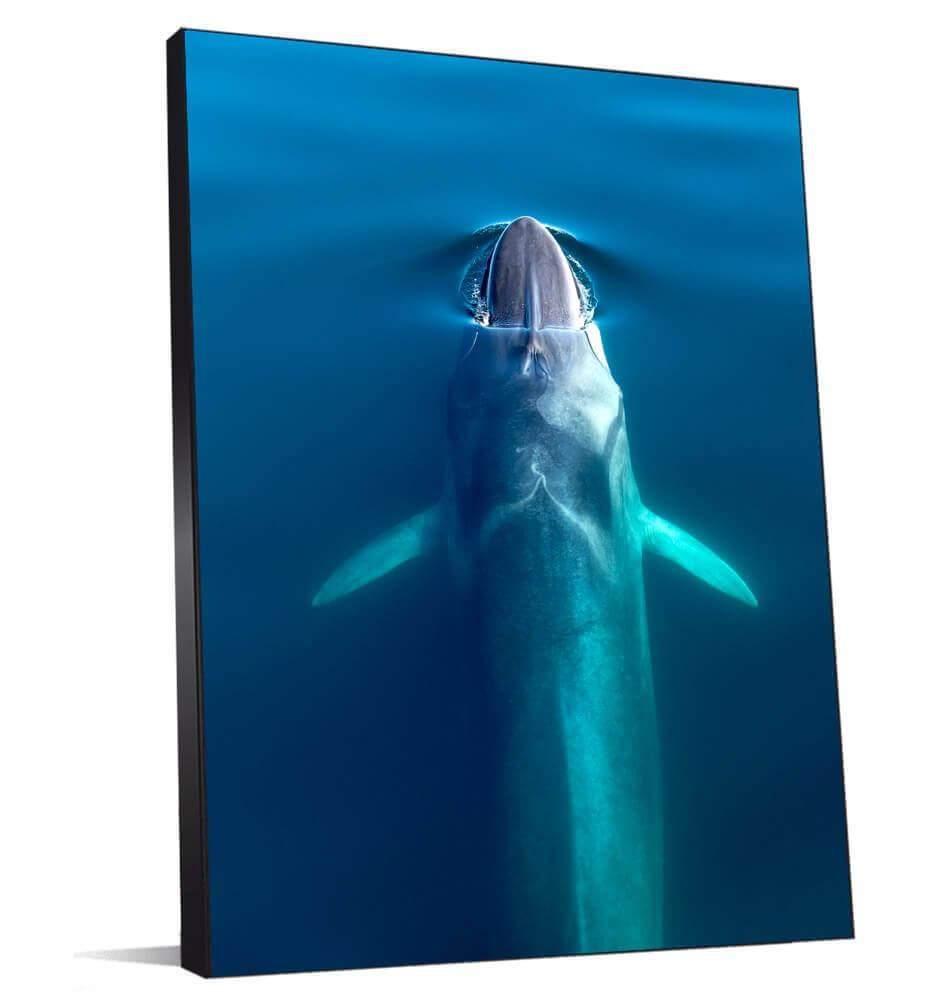 Tableau au-dessus de la Baleine bleue