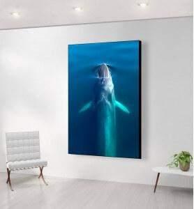 Grand Tableau au-dessus de la Baleine bleue
