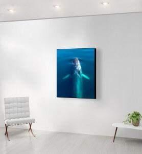 Moyen Tableau au-dessus de la Baleine bleue