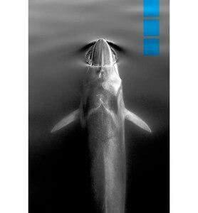 Tableau au-dessus de la Baleine bleue noir et blanc