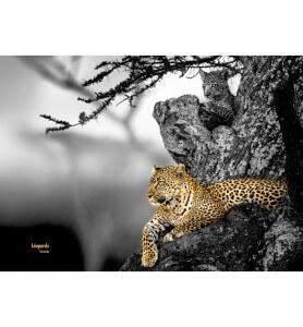 Tableau Le regard du Léopard noir et blanc