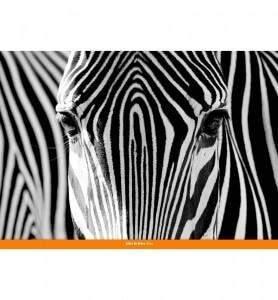 Tableau Camouflage noir et blanc