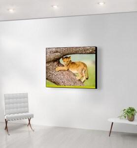 Moyen Tableau Lionceau joueur du Masaï-Mara