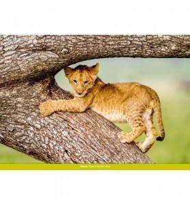 Tableau Lionceau joueur du Masaï-Mara
