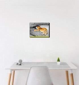 Petit Tableau Lionceau joueur du Masaï-Mara noir et blanc