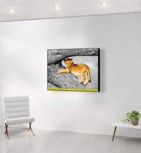 Moyen Tableau Lionceau joueur du Masaï-Mara noir et blanc
